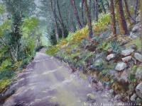 Sous-bois en Ardèche